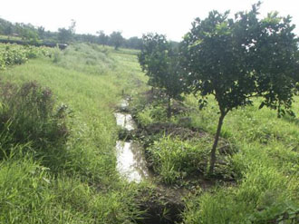 Plugged trenches for water and soil conservation in Bamhani Base Centre